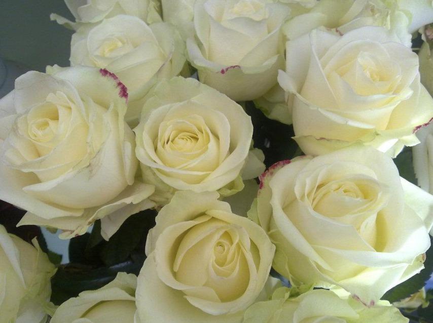 Floreale negozio di fiori Perugia