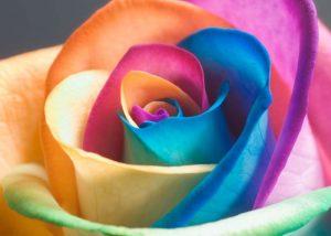 sorgenia_fiori
