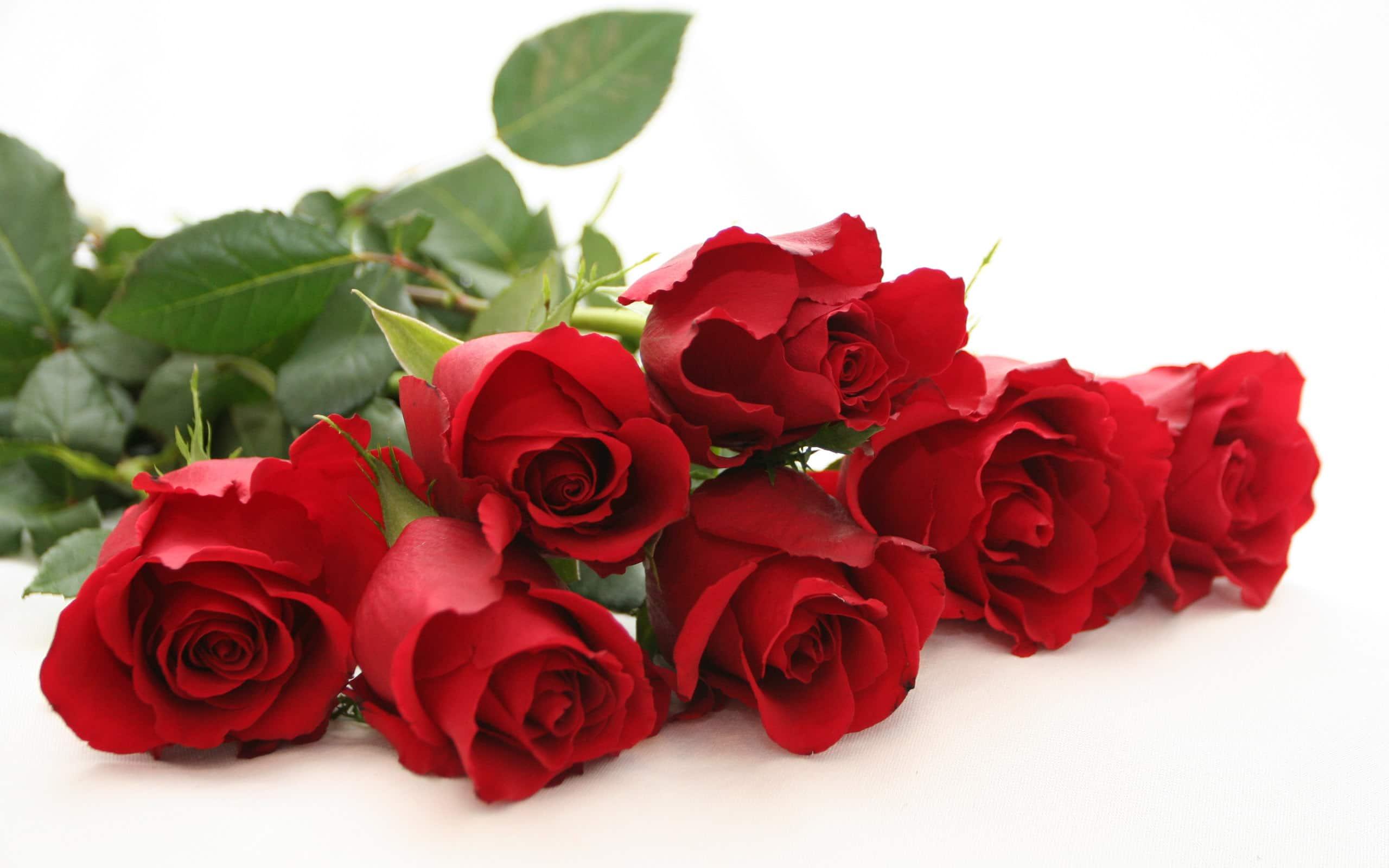 Rose rosse per dire Ti amo