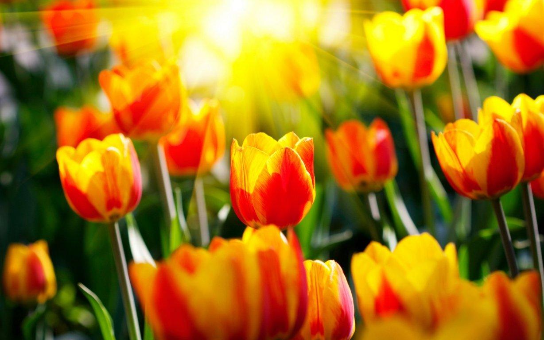 Regalare-fiori-tante-occasioni